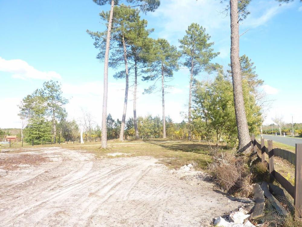 Gourbera Landes terrain picture 3307117