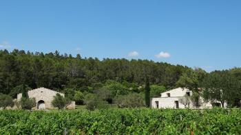 Lorgues Var vineyard foto