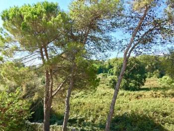 Ghisonaccia Haute-Corse huis foto 4570134