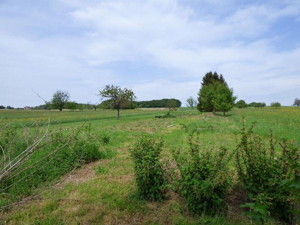 Waldighofen Haut-Rhin Grundstück Bild 3467343