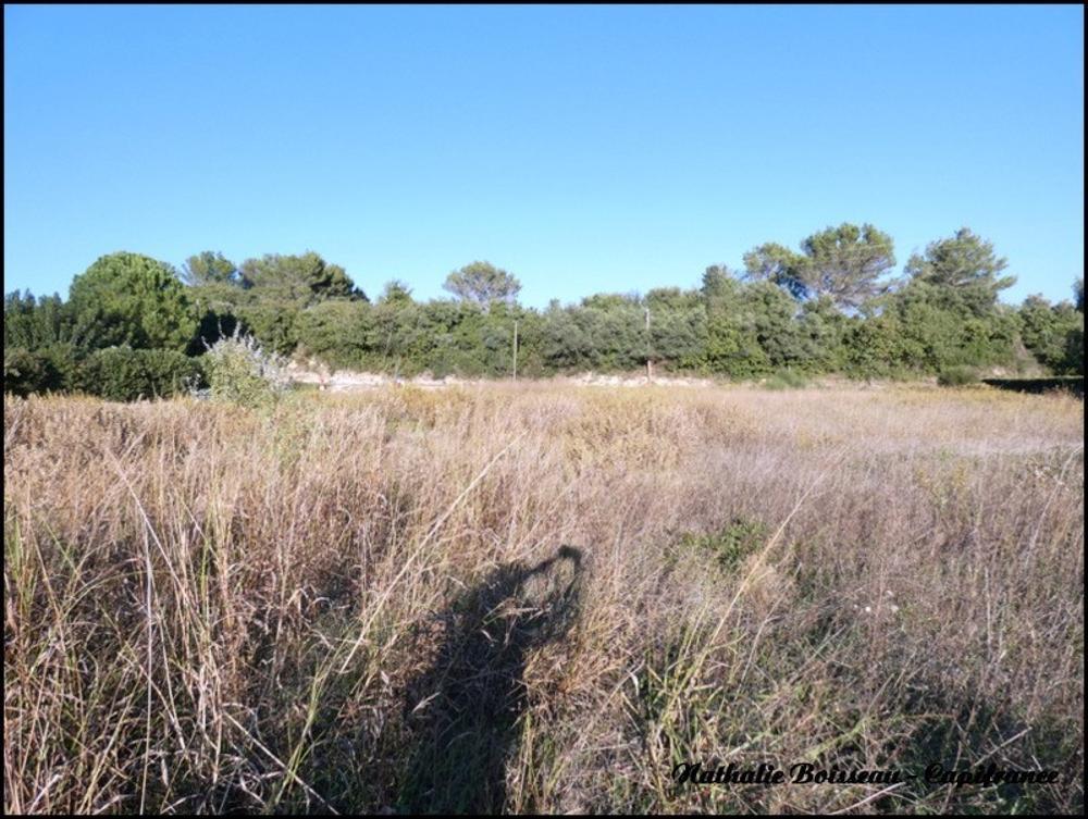Rochefort-du-Gard Gard Grundstück Bild 3611508
