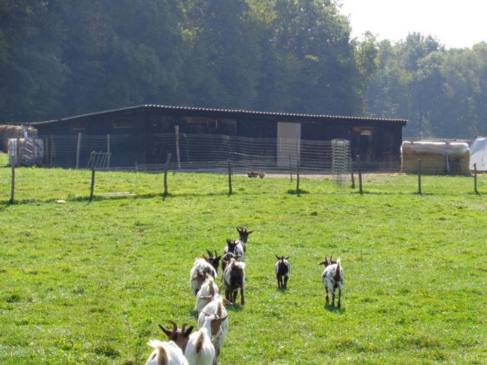 Montrevel-en-Bresse Ain Bauernhof Bild 3547018