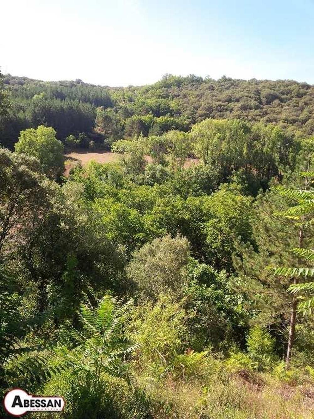 Riols Hérault terrain picture 3780824