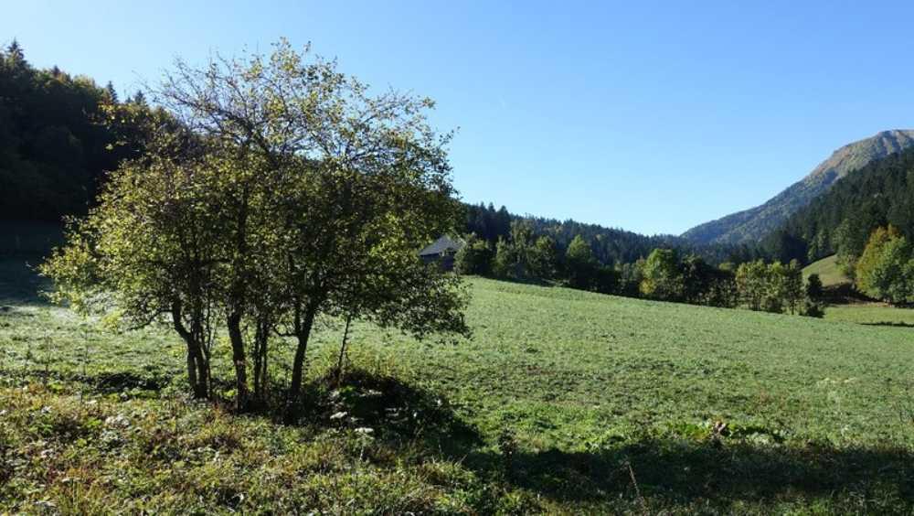 Aillon-le-Jeune Savoie Grundstück Bild 3837985