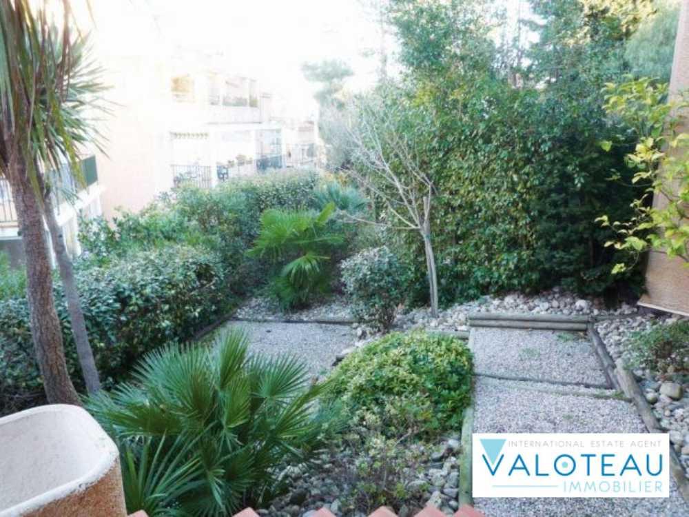 Collioure Pyrénées-Orientales appartement photo 3918403