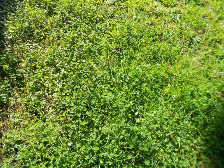 Vayres Gironde terrain picture 4281763