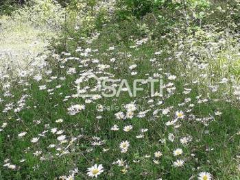 Mugron Landes terrein foto 4656399