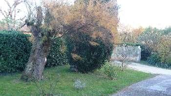 Bergerac Dordogne maison photo 4857822
