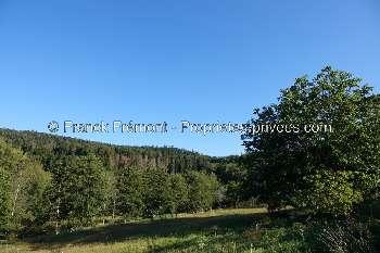 Saint-Nabord Vosges terrain picture 5051702