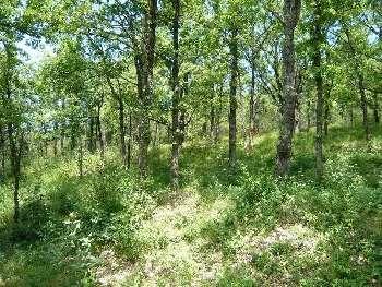 Cassagnes Lot terrain photo 5034567