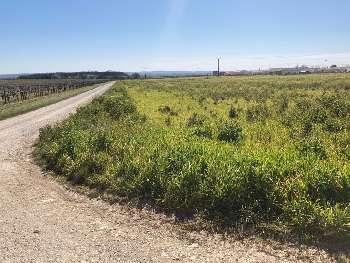 Foussignac Charente terrain picture 5545638