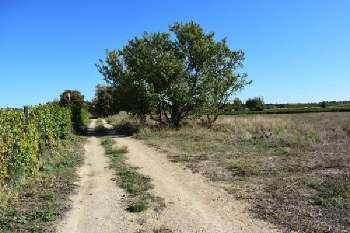 Colombiers Hérault terrain picture 5586869