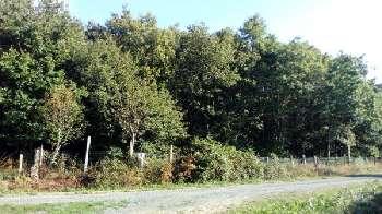 Palluau Vendée terrain picture 5669504