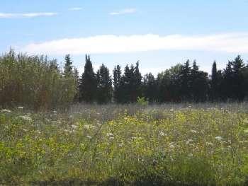 Vauvert Gard terrain picture 5656933