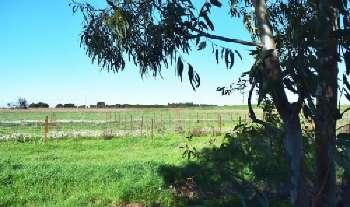 Florensac Hérault terrain picture 5656892